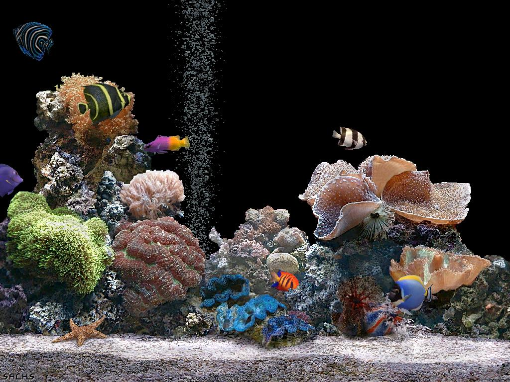 Desktop background fond d 39 cran gratuit aquarium qui bouge for Fond ecran aquarium