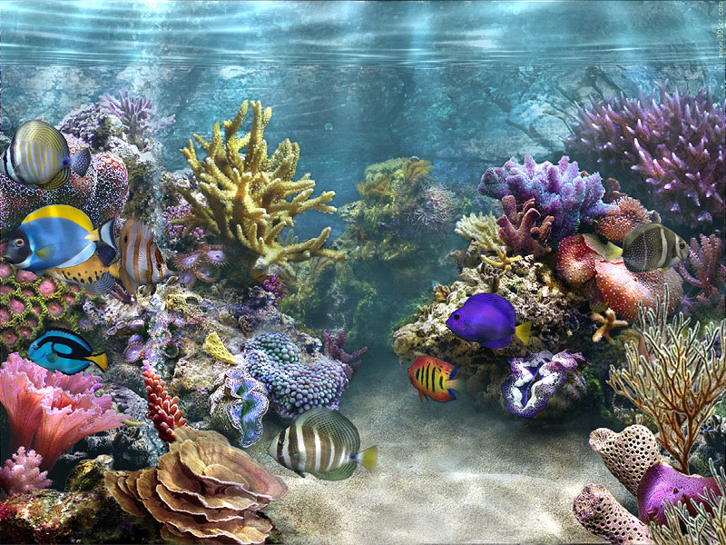 desktop background fond d 39 cran anim gratuit aquarium. Black Bedroom Furniture Sets. Home Design Ideas